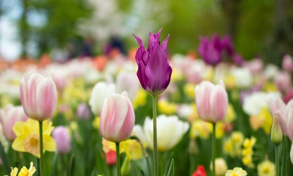 29 consejos de jardinería para la Primavera