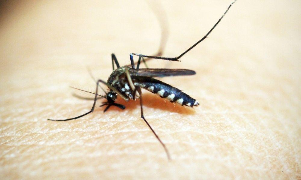 Detectados los primeros casos autóctonos de dengue en España