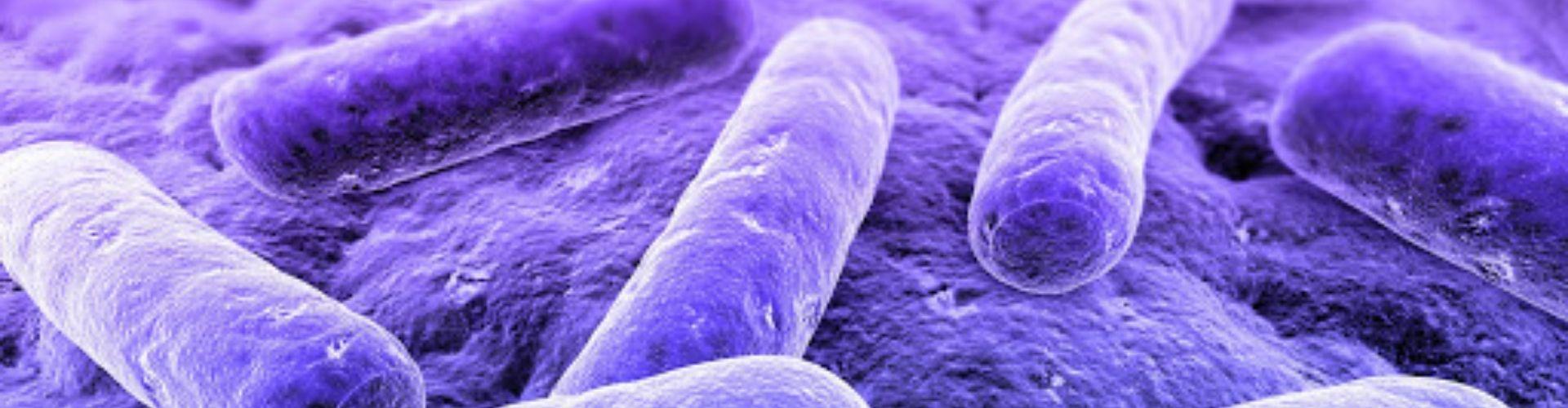 Servicio de control de Legionella en Antequera