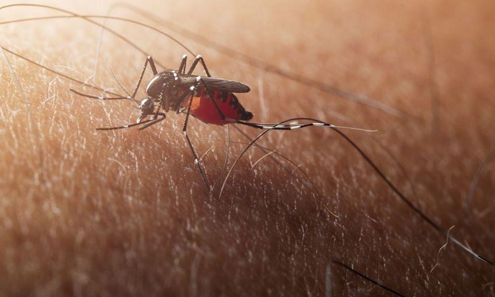 trae a España un mosquito invasor y que deja ya 16 hospitalizados en Sevilla