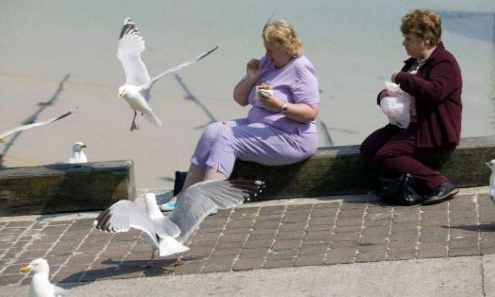 Plaga de Gaviotas Control de Aves Alesza Services Sanidad Ambiental