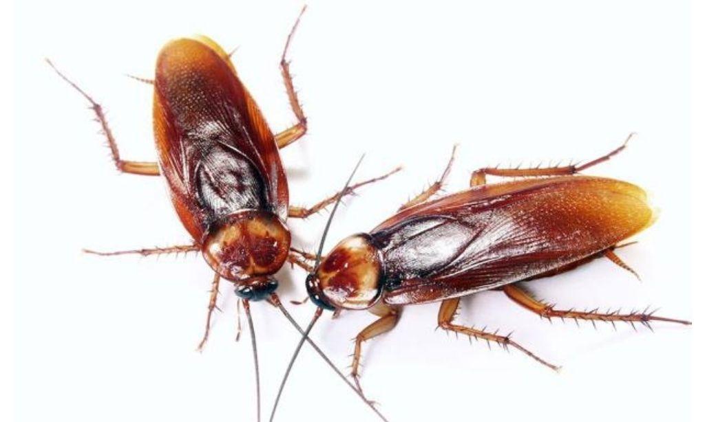 eliminamos las plagas de cucarachas de manera efectiva