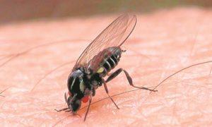 La mosca negra no da tregua a los vecinos de Villaverde-1