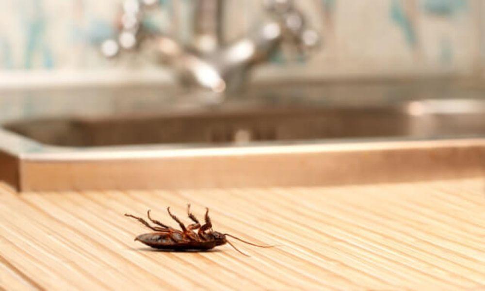 Cucarachas, Como eliminarlas definitivamente