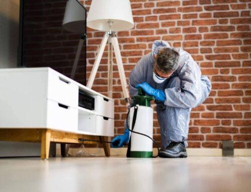 Servicio de control de plagas urbanas de la mano de una empresa especializada como Alesza